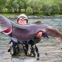 The mighty Taimen, mega fish of the Mongolian rivers