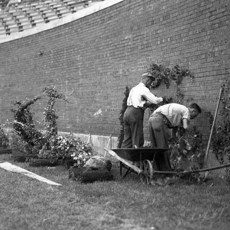 1-wrigley-field-planting-ivy-1937