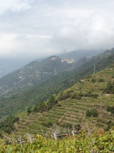 Terraced Vineyards of the Cinque Terre