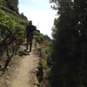 David in the vertical vineyard