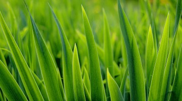 Super Simple, Super Cheap Lawn Care for a Gorgeous Green Lawn