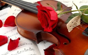 violin-red-rose