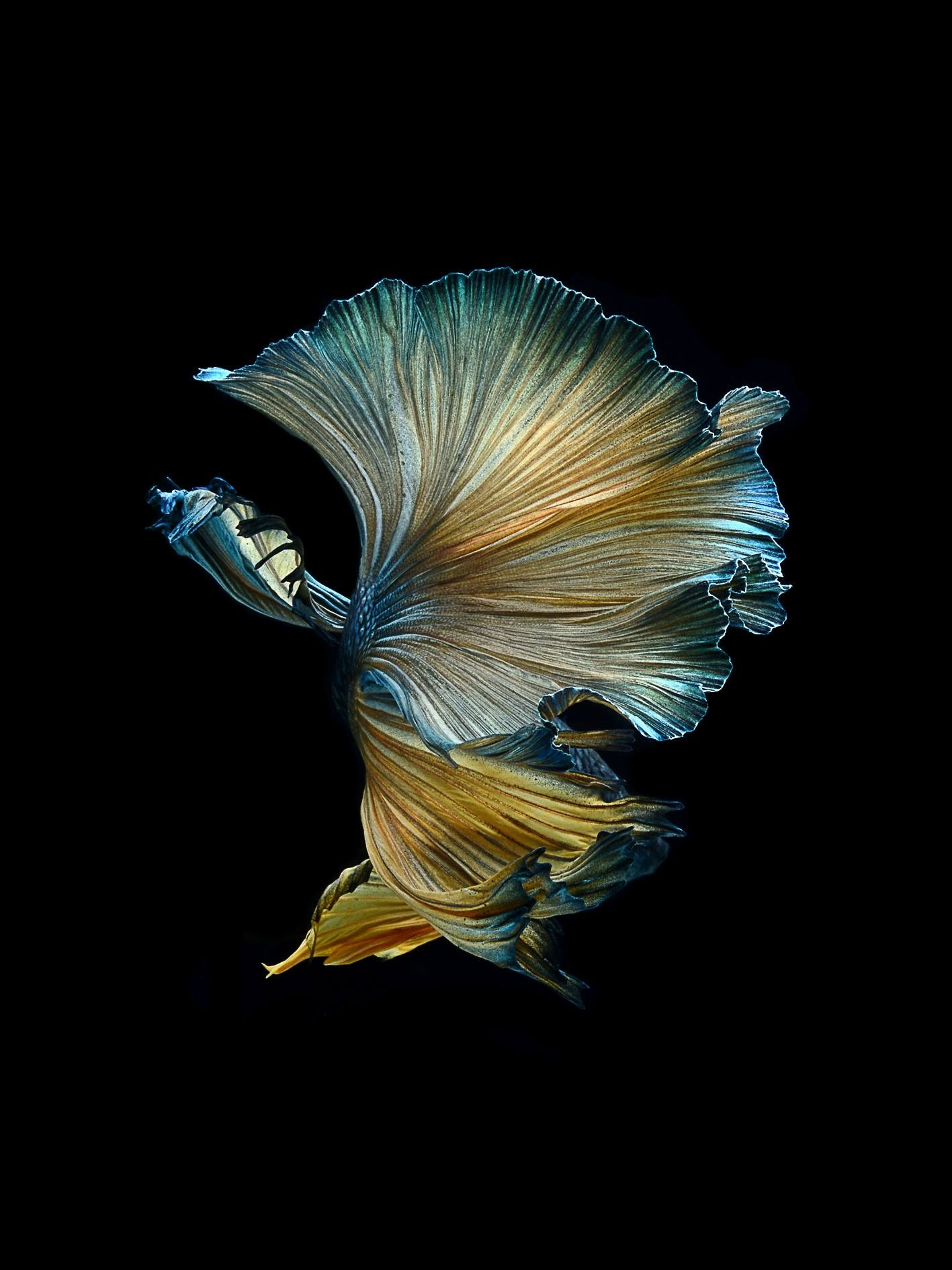 Iphone X Off White Wallpaper Strange And Funky Animal Photographer Visarute