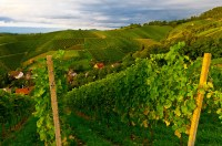 Vineyards, Offenburg, Baden-Wrttemberg, Germany | Blaine ...
