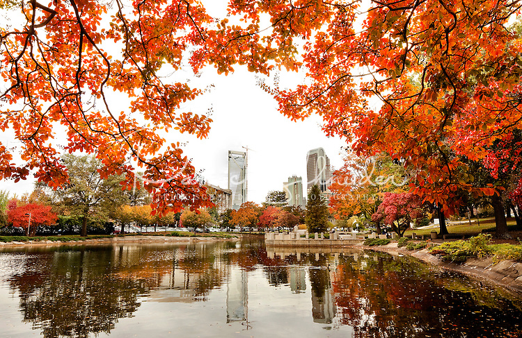 Hd Wallpaper Fall Leaf Change Colorful Autumn Leaves In Downtown Uptown Charlotte