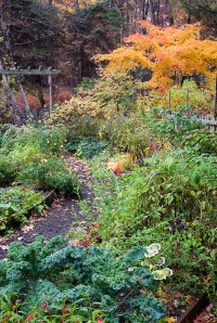 Autumn fall garden with vegetables, flowers, fall foliage ...