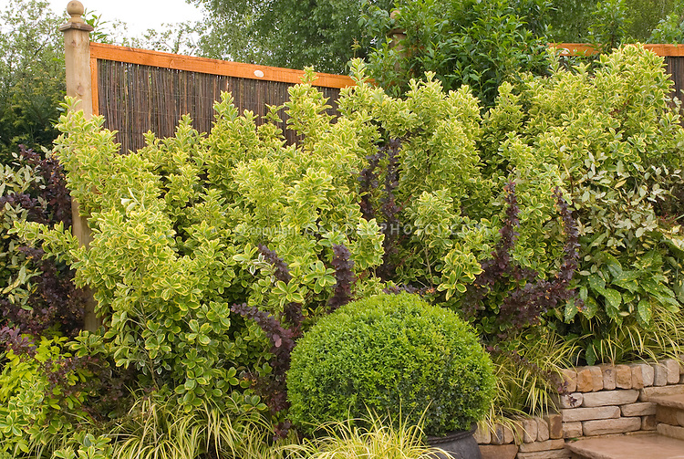 Privacy Hedging in Backyard