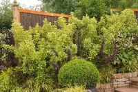 Privacy Hedging in Backyard | Plant & Flower Stock ...