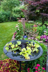Colorful backyard garden | Plant & Flower Stock ...