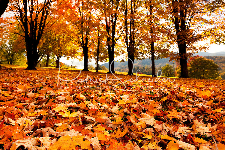 Free Fall Screen Wallpaper Leaf Peeping Tourism Fall Tree Foliage In The North