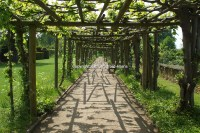 Grape Vine Pergola | Outdoor Goods