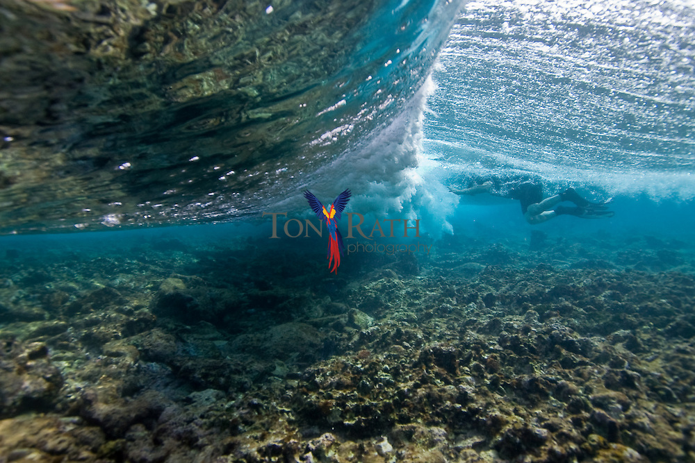 3d Wallpaper Under The Sea Waves Breaking Over Coral Reef Tony Rath Photography