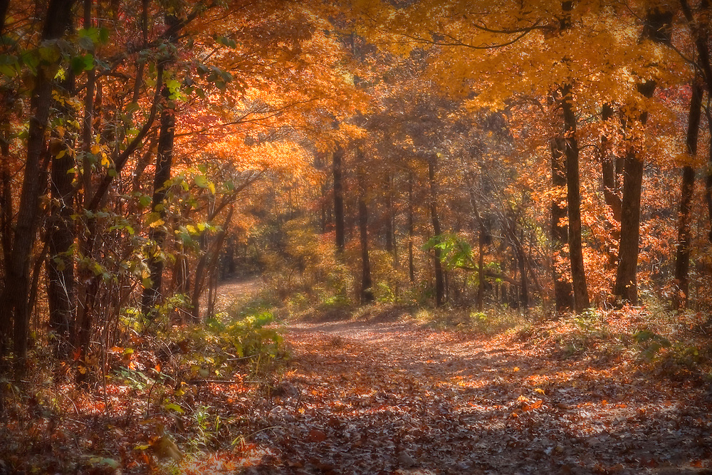 Free Fall Foliage Wallpaper L 72 Beauty Of Fall In The Ozarks Psd Images Of The Ozarks