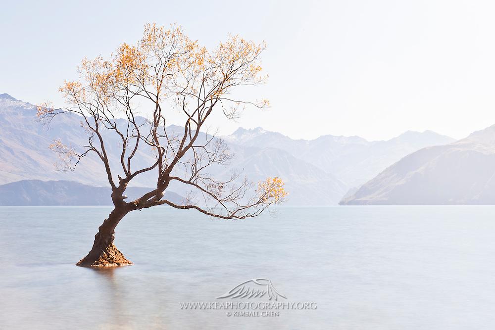 Light Fall Wallpaper Autumn At Lake Wanaka Central Otago New Zealand Kea