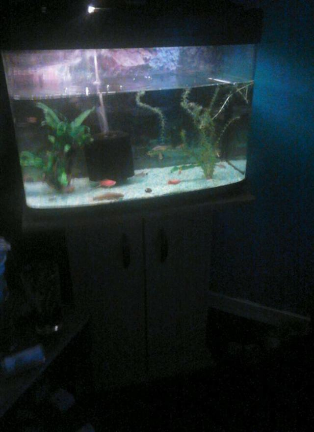 Fish tank with stand and fish and accessories, including filter