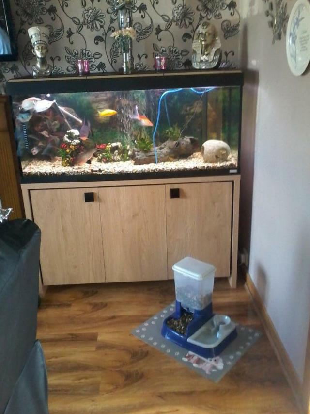 Fish tanks for sale fife fish tank 2017 fish tank for Koi pond heaters for sale