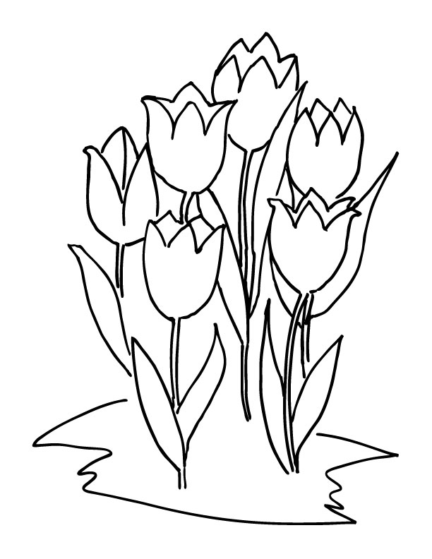 lalele planse colorat flori primavara jpg