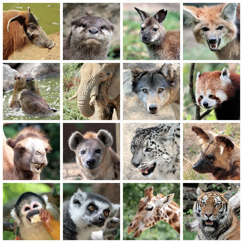Maki Animale Animal Mammals Collage Stock Photo Elenarts 30563867