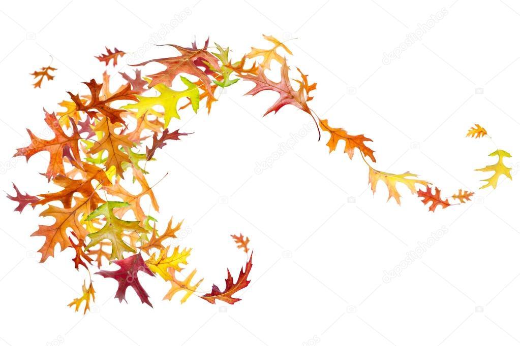 Fall Of The Leafe Wallpaper Tourbillon De Feuilles Mortes Photographie Dibrova