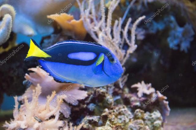 Pretty Colorful Tropical Fish Tropical fish tank   stock