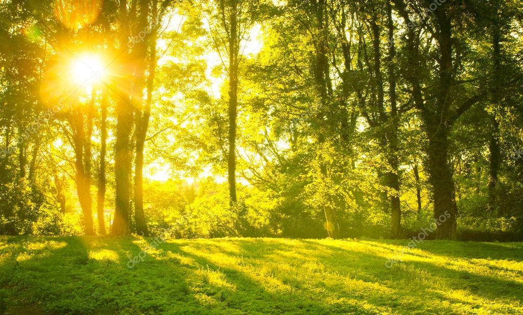 Fall Woodland Creatures Wallpaper 在早晨的阳光森林 图库照片 169 Masterwilu#17852989