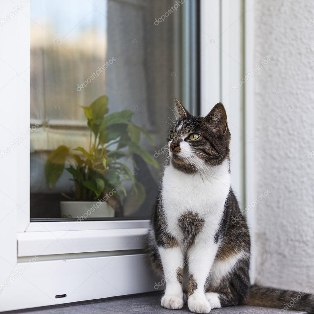 Maison Chat Exterieur Rue Chat Chat Sauvage Maison Chat Fenêtre Seuil Kitty Pour Animaux