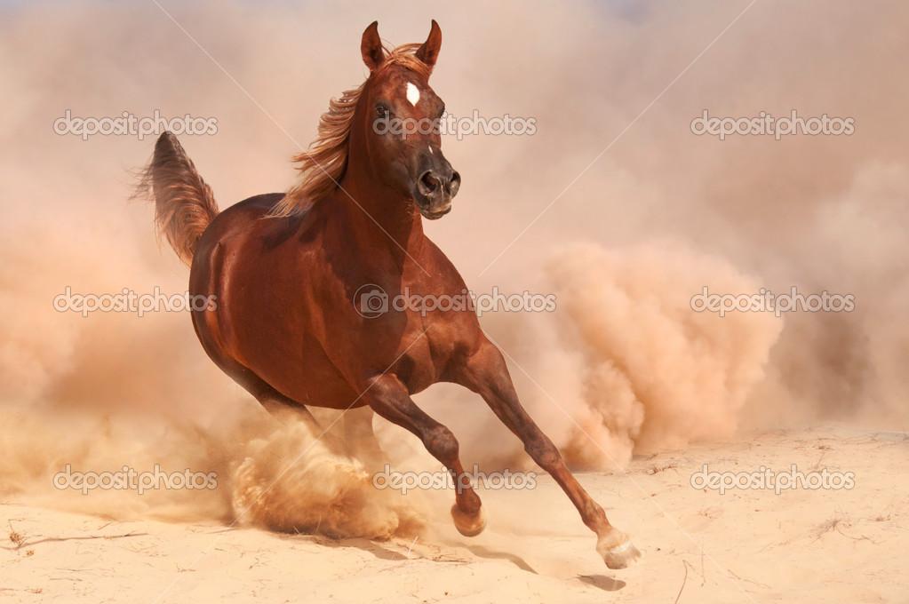 Running Horse 3d Wallpaper Puro Sangue Cavalo 225 Rabe Correndo No Deserto Fotografias