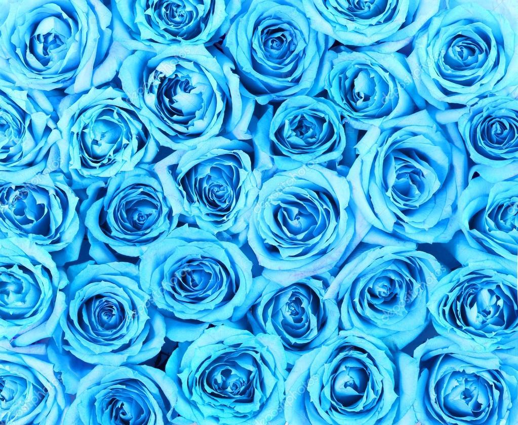 Baby Pink Iphone Wallpaper Turquoise Roses Background Stock Photo 169 Guzel 43652695