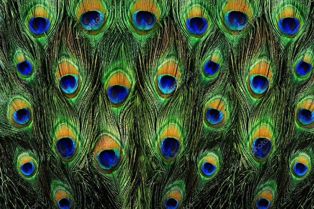 Purple Animal Print Wallpaper Bright Peacock Feather Backgrounds Pictures To Pin On