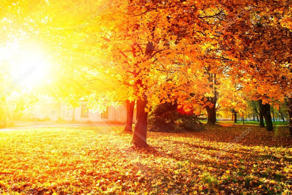 Free Fall Flowers Wallpaper 秋天。秋季的公园。秋天的树木和叶子 图库照片 169 Subbotina#20361877