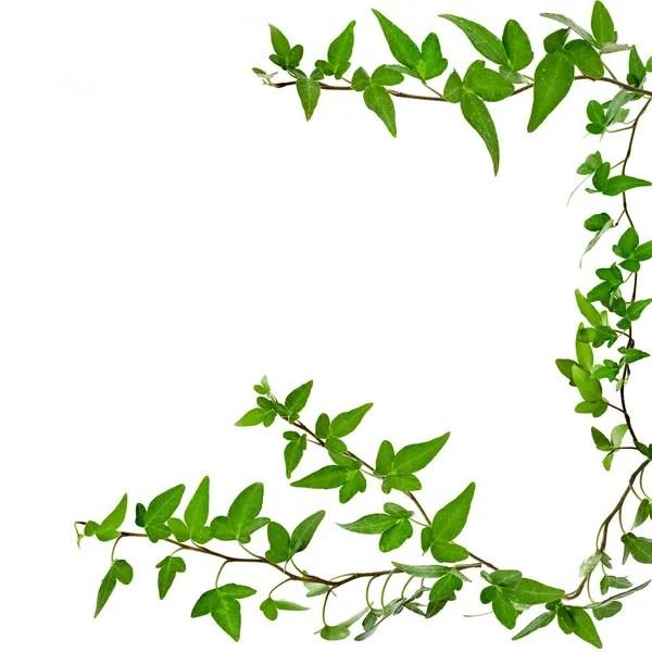 Green leaves frame on white background \u2014 Stock Photo © tanatat #50439563