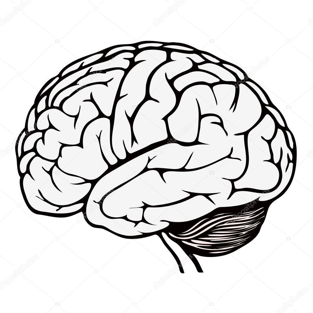 brain diagram stock images image 34677164