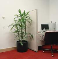 Potted plant next to office cubicle  Stock Photo | #178856870