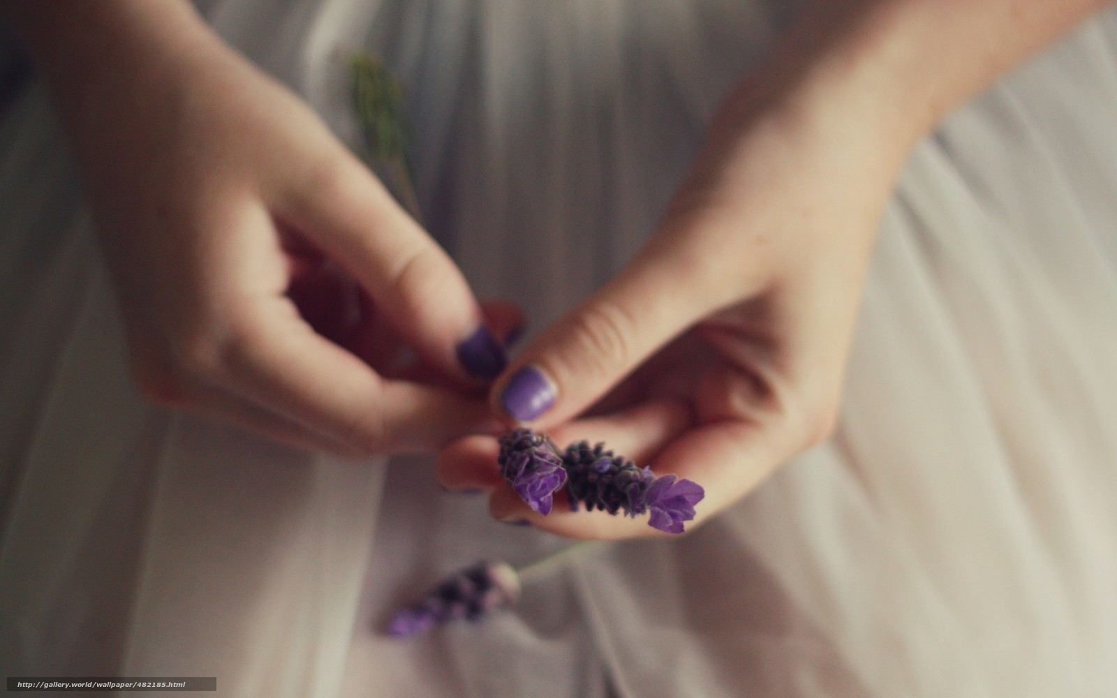 Cute Background Wallpaper Download Download Wallpaper Flowers Girl Hand Florets Purple