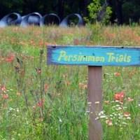 Landscape plans: Tuscan style backyard landscaping ...