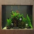 Fluval Edge Aquarium 46L in Gloss Black   Contemporary   Fish Supplies