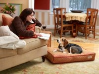 Integrating Pet-Friendly Decor in Your Home - Mohawk ...