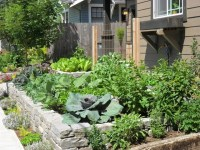 Front Yard Edible Garden - Craftsman - Landscape ...