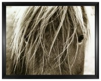 Hyden Rustic Lodge Modern Blonde Horse Photo Wall Art ...