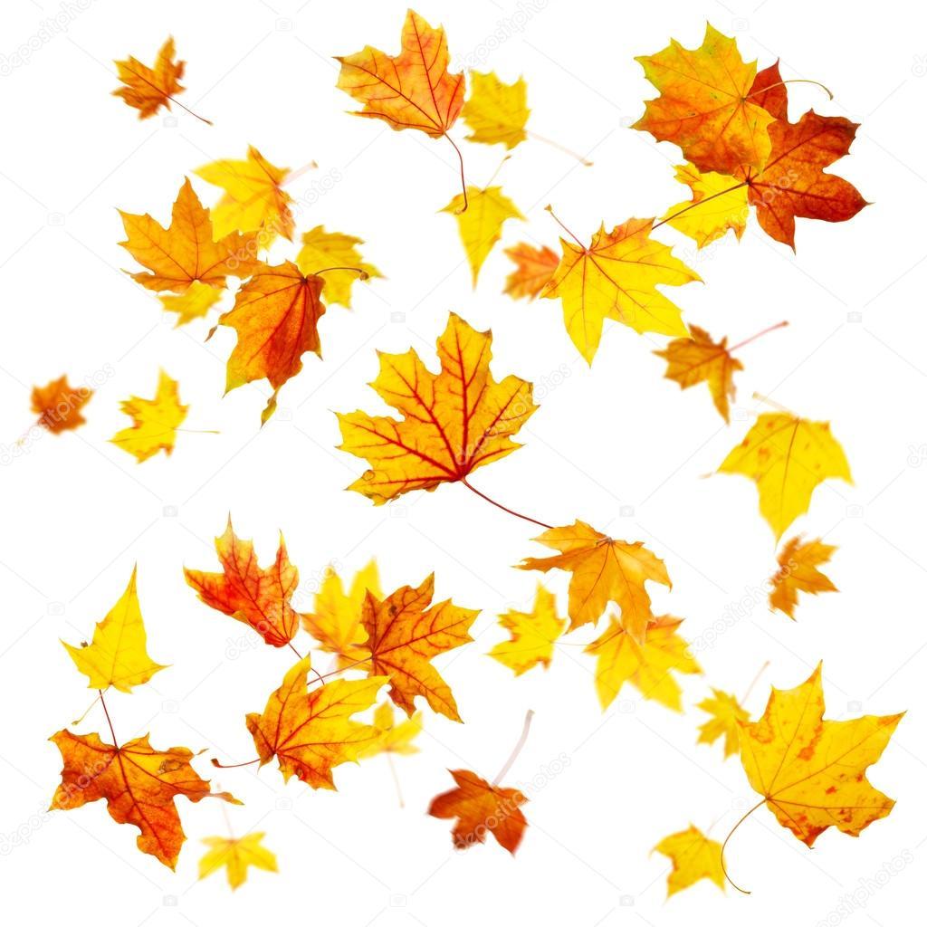 Fall Leaves Falling Wallpaper Hojas De Oto 241 O Volando Foto De Stock 52370007