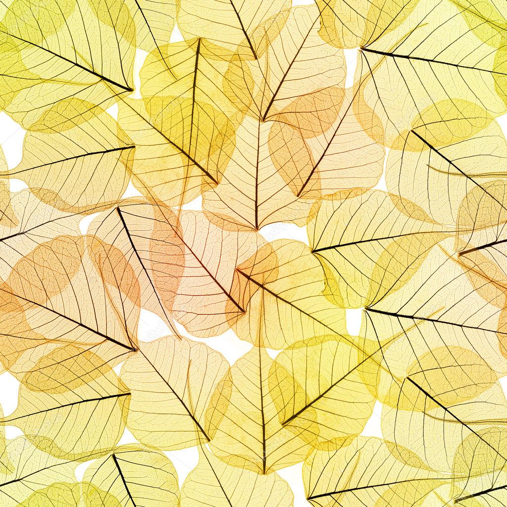 Autumn Fall Live Wallpaper Seamless Background Autumn Leaves Pattern Stock Photo