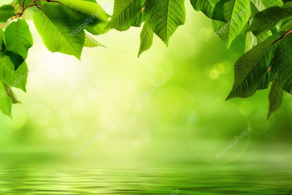 Water Wallpaper Hd Live Greenery And Water Background Stock Photo 169 Smileus
