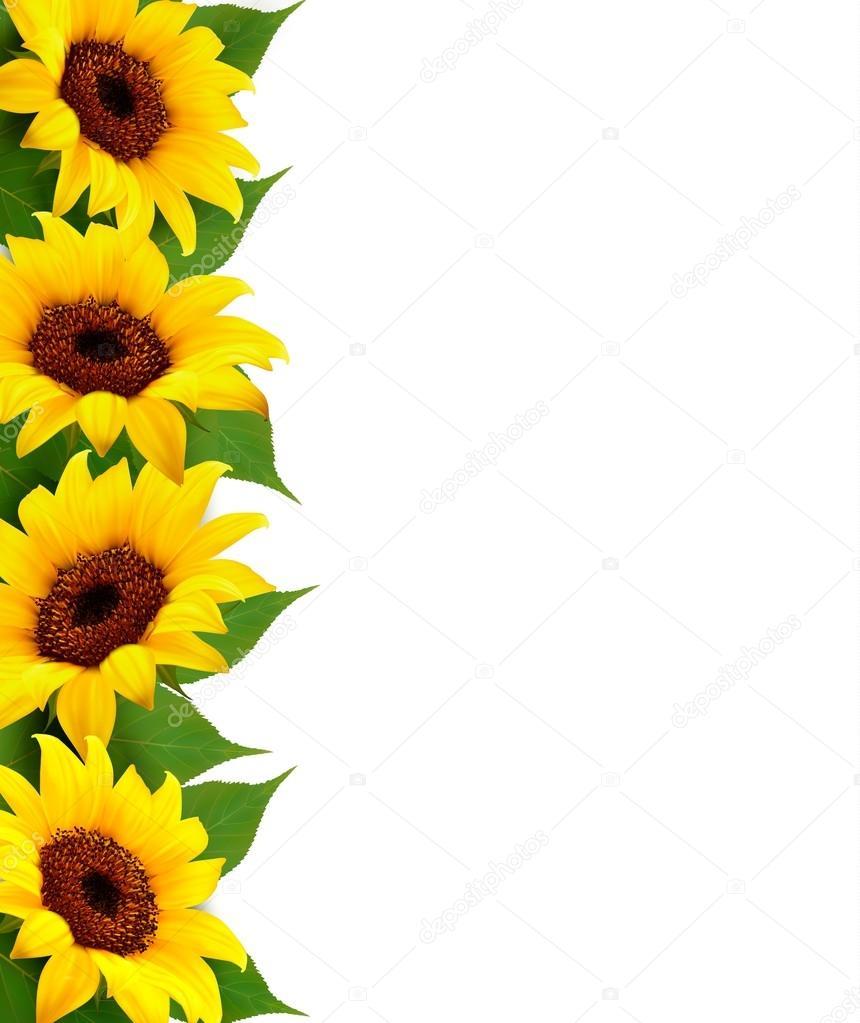 Fall Sunflower Wallpaper Fondo Girasoles Con Girasol Y Hojas Vector De Archivo