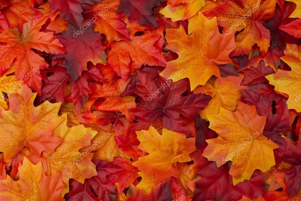 Free Fall Foliage Wallpaper Sfondo Di Foglie D Autunno Foto Stock 169 Karenr 83119482