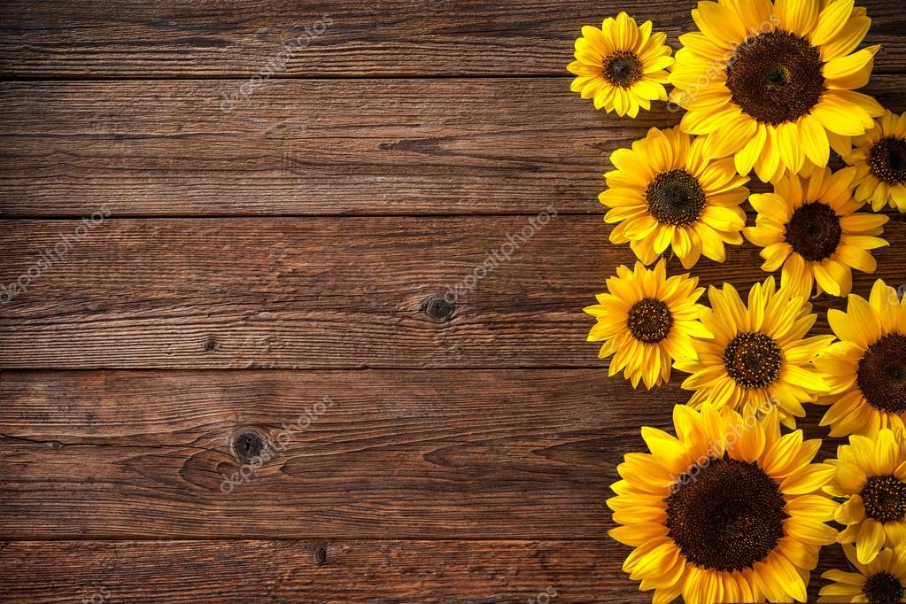 Fall Brithday Wallpaper Girasoles Sobre Fondo De Madera Fotos De Stock