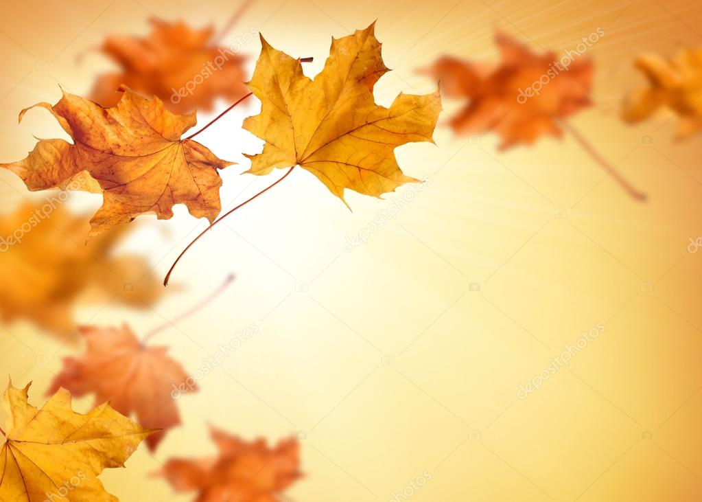 Fall Trees Wallpaper Fall Background With Falling Autumn Leaves Stock Photo