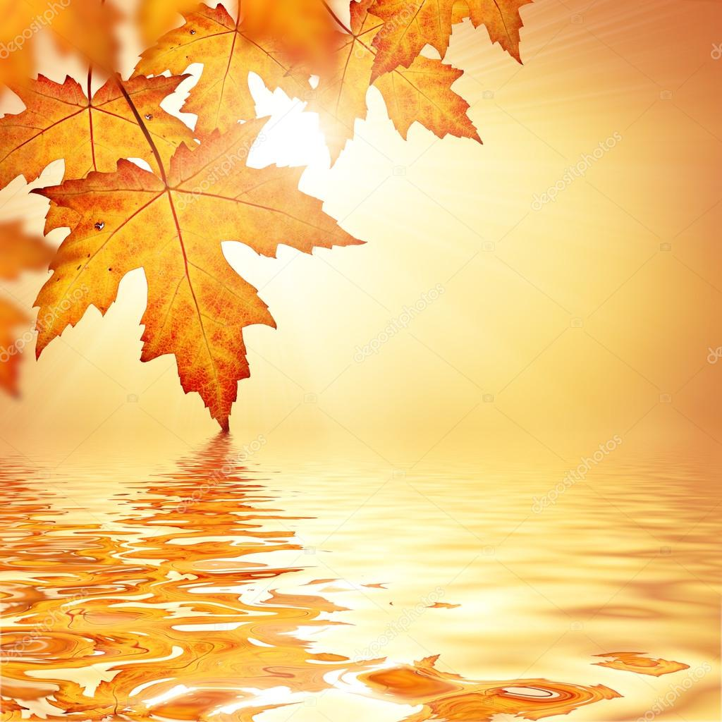 Autumn Fall Live Wallpaper Orange Fall Leaves Border Background Stock Photo