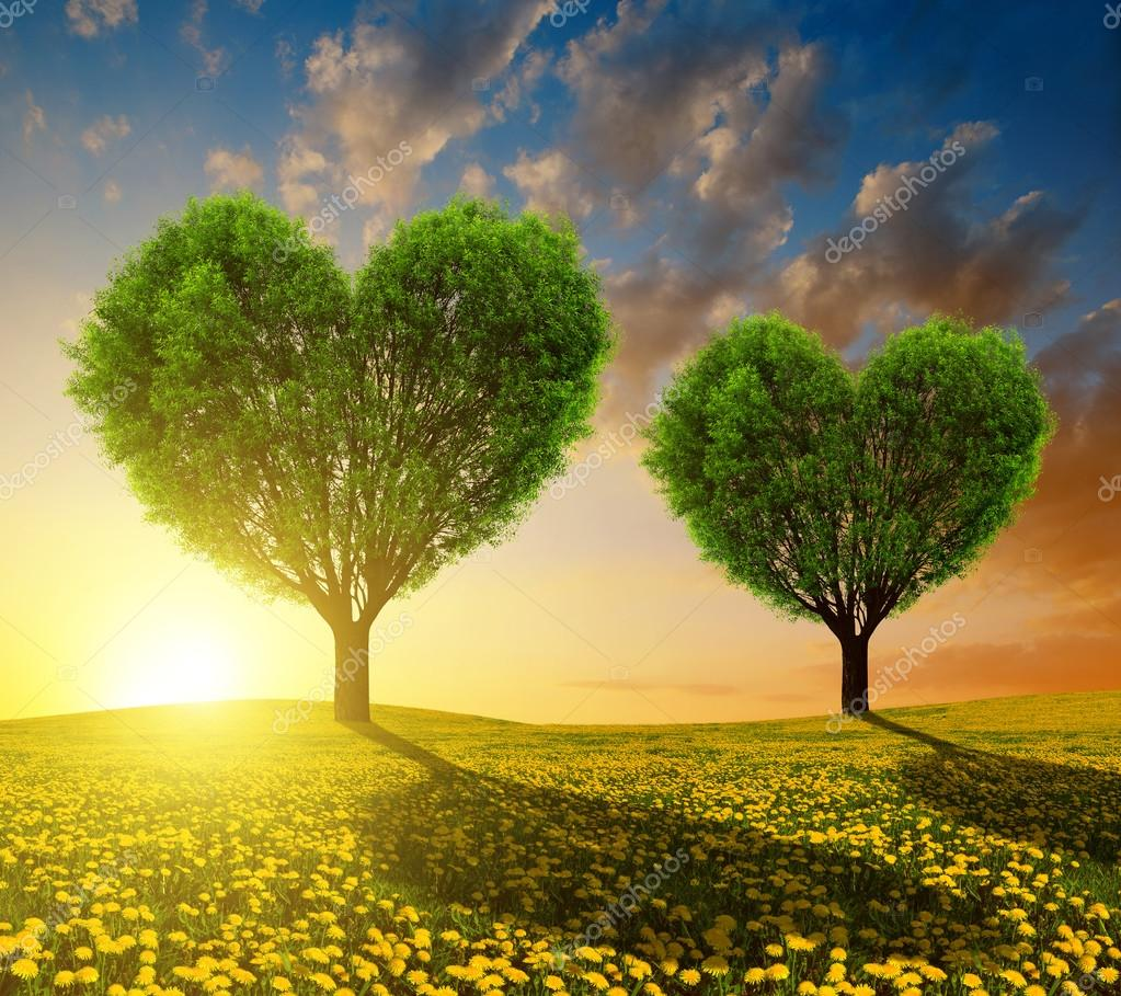 Heart Shape Wallpaper With Quotes Dandelion Fields With Trees In The Shape Of Heart Stock