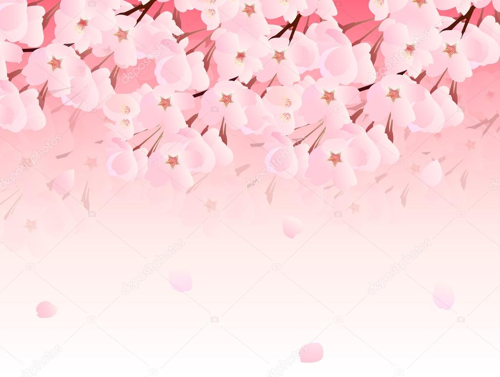 Shappy Chic Cherry Blossom Background — Stock Vector © Jboy24 #60407415