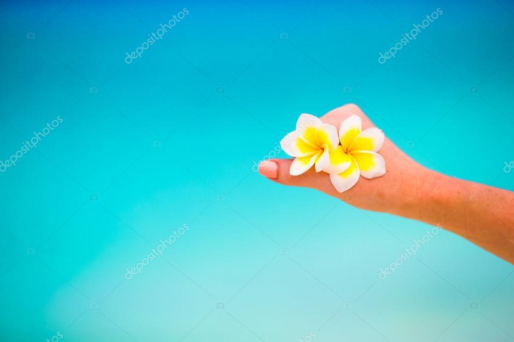 Beautiful frangipani flowers background turquoise sea on white beach